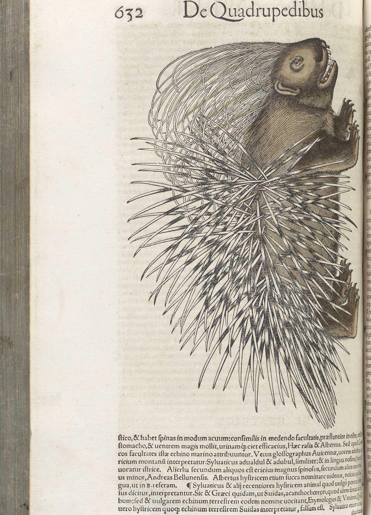 historical anatomies on the web conrad gesner home