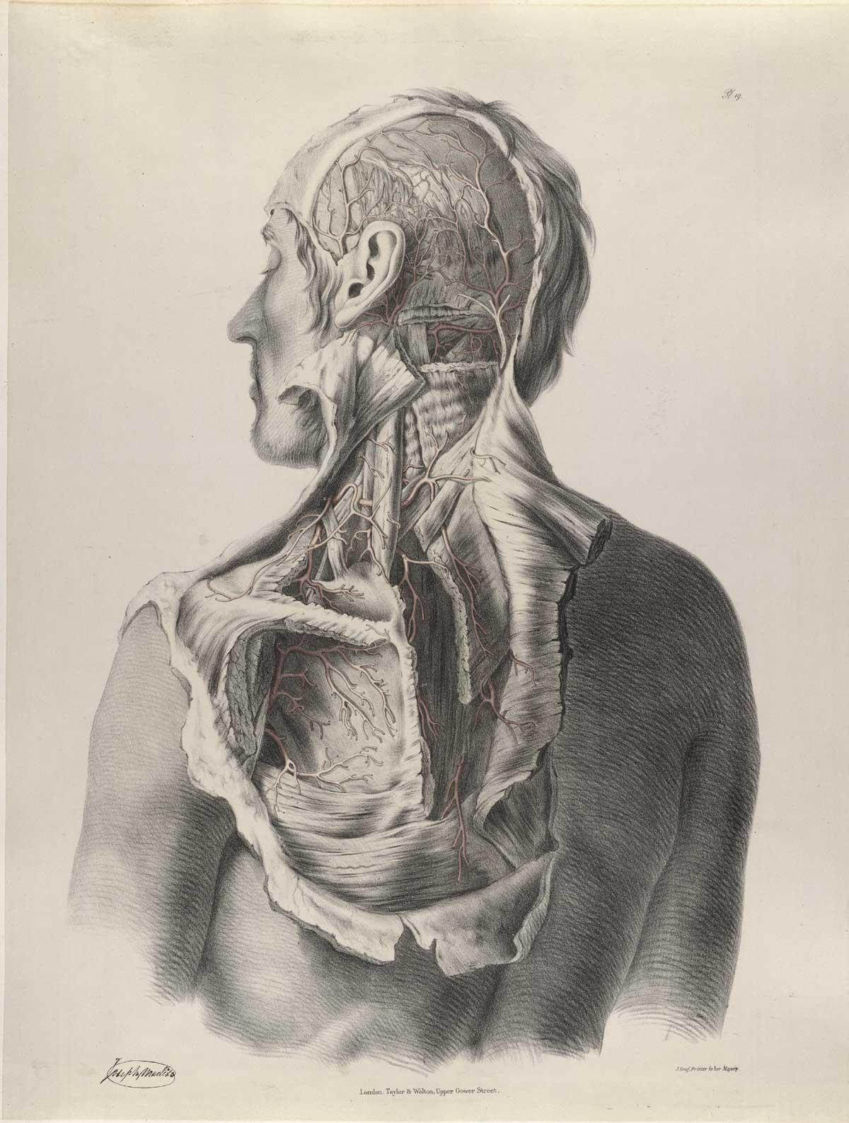 Historical Anatomies On The Web Richard Quain Home