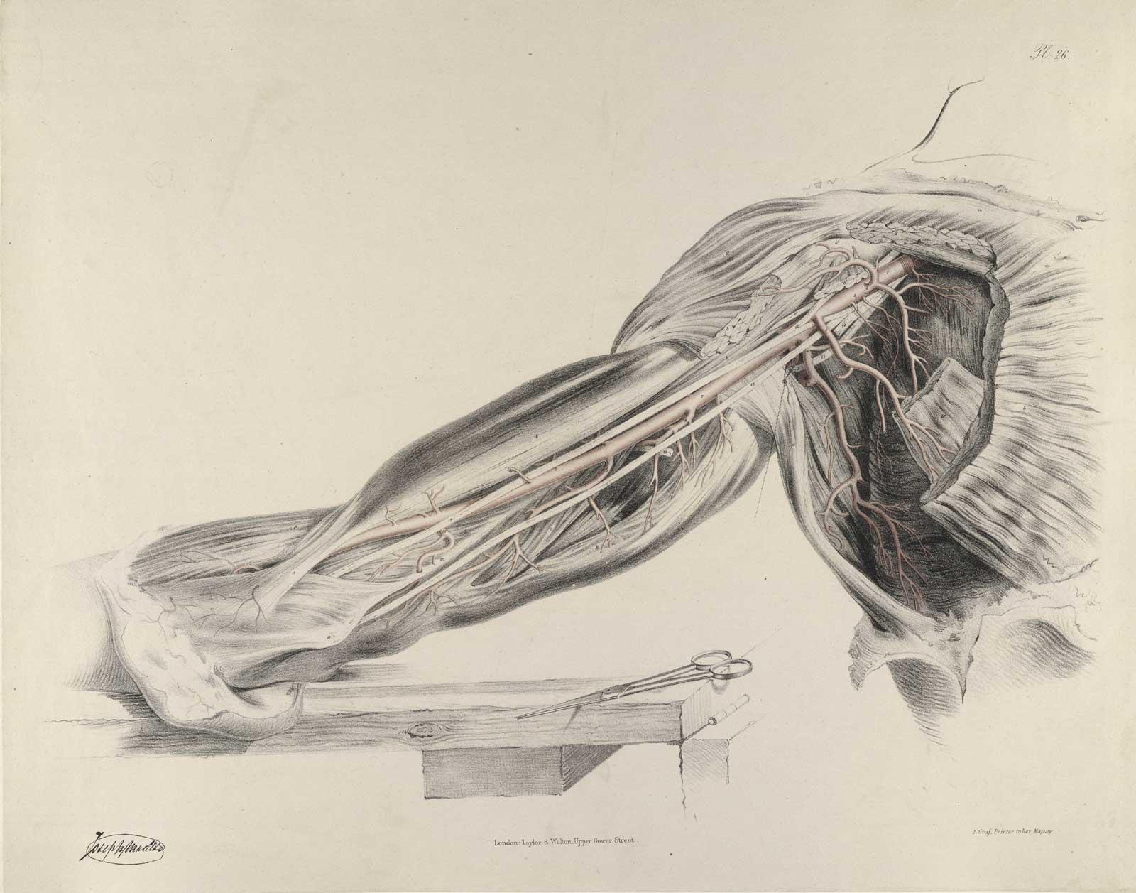 Historical Anatomies on the Web: Richard Quain Home