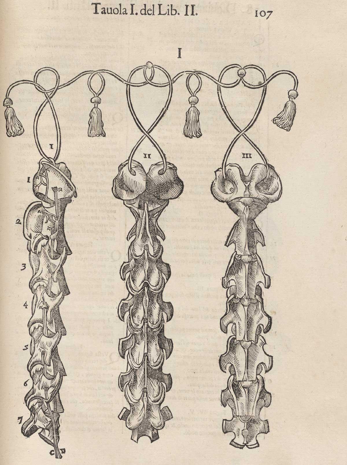 Historical Anatomies on the Web: Carlo Ruini Home