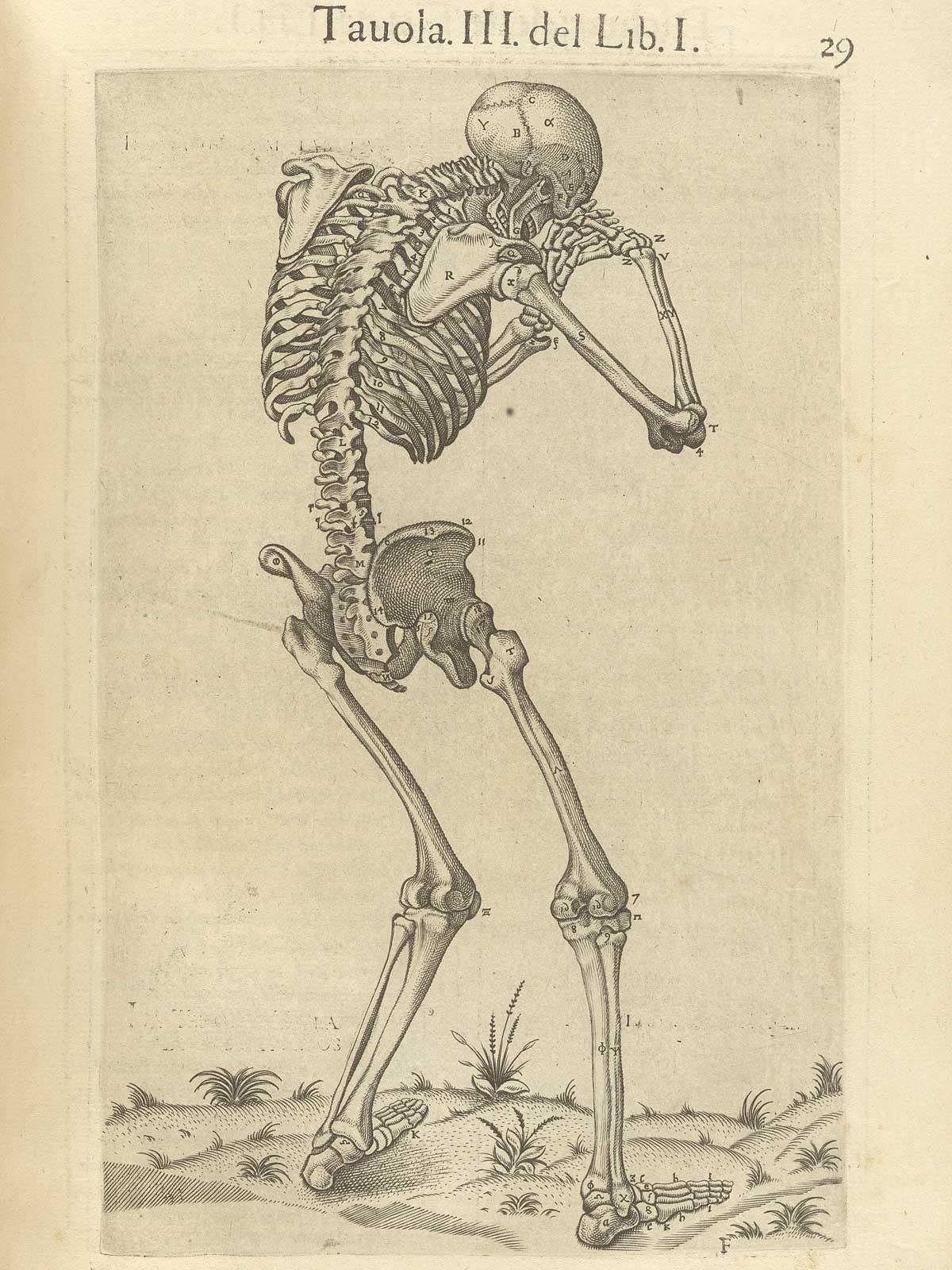 Perfecto Anatomía De Brest Ilustración - Imágenes de Anatomía Humana ...