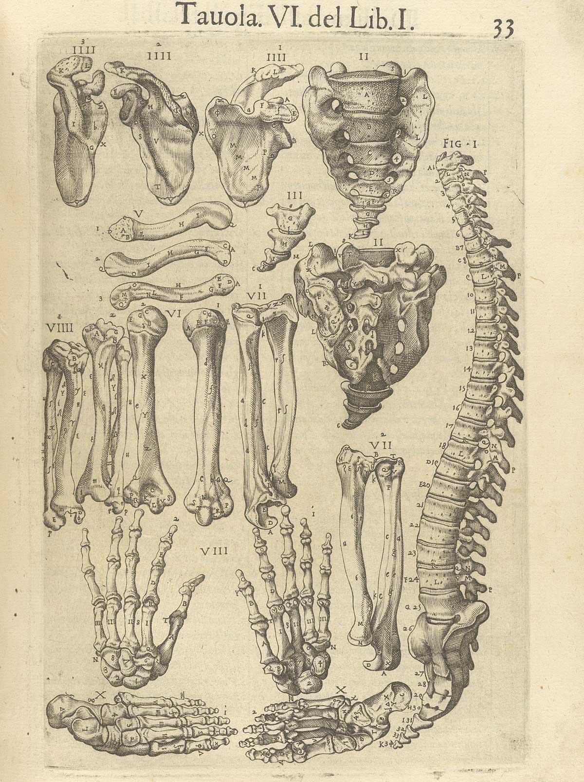 Historical Anatomies On The Web Juan Valverde De Amusco Home