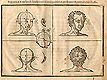 Woodcut illustration divided into four quadrants showing two male heads in the top two quadrants turned three quarters to the right with the one on the left showing proportional lines and measurements, and in the two lower quadrants two heads of the back of a man's head with the one left showing proportional lines and measurements, from Jehan Cousin's Livre de pourtraiture, NLM Call no.: WZ 250 C8673L 1608.