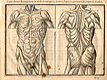 Woodcut illustration of two anatomical figures standing side by side showing the musculature in detail viewing the body from the front and the back, from Jehan Cousin's Livre de pourtraiture, NLM Call no.: WZ 250 C8673L 1608.