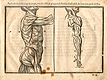 Woodcut illustration of two anatomical figures standing side by side showing the musculature in detail viewing the body from the side the image on the left with the arm raised, the image on the right focusing on the lowered arm, from Jehan Cousin's Livre de pourtraiture, NLM Call no.: WZ 250 C8673L 1608.