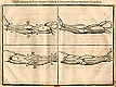Woodcut illustration of four images of details of the musculature of the male arm, the upper two show the inside of an arm outstretched to the left, the lower two show the outside of an arm outstretched to the right, all with markers showing the length proportions of the parts, from Jehan Cousin's Livre de pourtraiture, NLM Call no.: WZ 250 C8673L 1608.