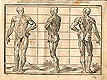 Woodcut illustration of standing three full length anatomical figures, the one on the far left facing front, the middle one viewed from the side, and the one on the right viewed from the back, from Jehan Cousin's Livre de pourtraiture, NLM Call no.: WZ 250 C8673L 1608.