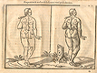 Woodcut illustration of two nude female anatomical figures viewed from behind, both images in identical poses facing slightly to the left in a pastoral setting, with the left hand image showing the proportions of the figure measured out, from Jehan Cousin's Livre de pourtraiture, NLM Call no.: WZ 250 C8673L 1608.