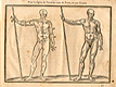 Woodcut illustration of two nude male anatomical figures viewed from the front, both images in identical poses facing to the right holding a staff in his right hand, with the left hand image showing the proportions of the figure measured out, from Jehan Cousin's Livre de pourtraiture, NLM Call no.: WZ 250 C8673L 1608.