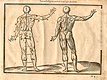 Woodcut illustration of two nude male anatomical figures viewed from behind, both images in identical poses facing to the right with right hand raised as if holding a staff, with the left hand image showing the proportions of the figure measured out, from Jehan Cousin's Livre de pourtraiture, NLM Call no.: WZ 250 C8673L 1608.