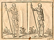 Woodcut illustration of two nude male anatomical figures viewed from the side, both images in identical poses facing to the right with right hand holding a staff, with the left hand image showing the proportions of the figure measured out, from Jehan Cousin's Livre de pourtraiture, NLM Call no.: WZ 250 C8673L 1608.