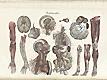 Plate [11] of Jean-Baptiste Sarlandière's Anatomie méthodique, ou Organographie humaine en tableaux synoptiques, avec figures, featuring the angeiographie or blood vessels throughout the body.