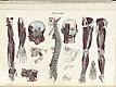 Plate [14] of Jean-Baptiste Sarlandière's Anatomie méthodique, ou Organographie humaine en tableaux synoptiques, avec figures, featuring the neurographie or nerves of the body.