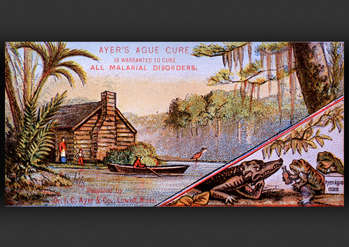 Bayou scene with a log cabin while an alligator and 2 toads sip from a glass bottle.