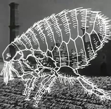 A large animated insect is superimposed on top of a scene of Muslims praying at Mecca