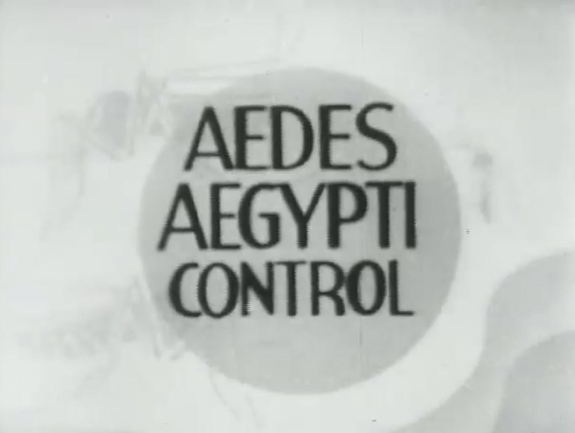 "Title card showing the words ""Aedes Aegypti Control"""