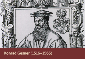 <a href='onlineactivities03.html'>3. Konrad Gesner (1516–1565)</a>     <h3> </h3>     <h4>Konrad Gesner from <em>Konrad Gessner als Gärtner</em>  (Konrad Gesner as a gardener), 1948</h4>     <h5>Creator: Diethelm Fretz     <br>Courtesy National Library of Medicine<br /></h5>     <p>Konrad Gesner was a Swiss naturalist whose 1551 publication, <em>Historiae Animalium</em>, is considered one of the first examples of modern zoology. Unlike earlier thinkers, Gesner included not only Greek and Biblical descriptions of animals in his writings, but also information that he had gained from dissection.</p>