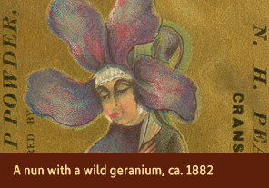 <a href='onlineactivities15.html'>5. A nun with a wild geranium, ca. 1882</a>     <h3>Advertising trade card for N.H. Pearce &amp; Co., Cranston, RI, ca. 1882</h3>     <h4>Courtesy National Library of Medicine</h4>     <p>A wild geranium extends from the downcast head of a nun on this trade card for a soap powder. Geraniums come in many colors, each of which were associated with several different meanings during the 1880s. Some of the meanings associated with geraniums were gentility, peace of mind, consolation, and melancholy. Wild geraniums, in particular, were linked to steadfast piety.</p>