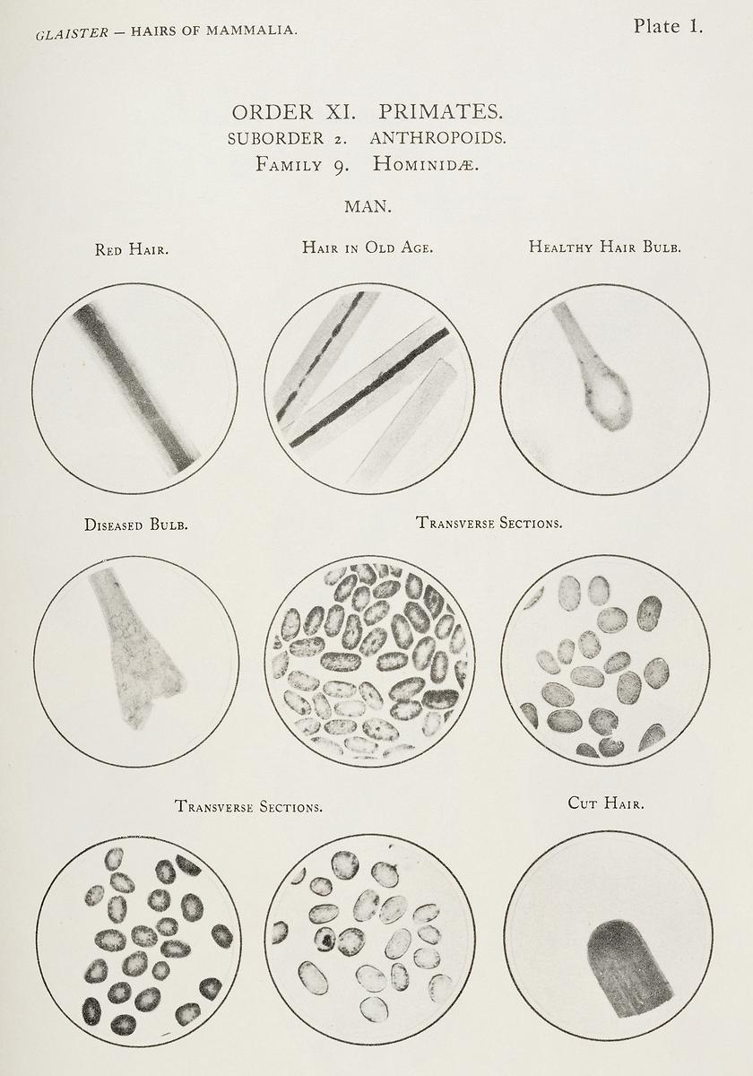 Types Of Human Hair 6