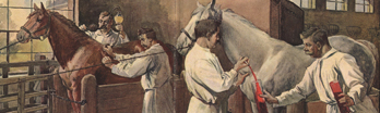 Men in white smocks extract blood from two horses in a stable.