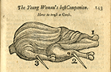Diagram of fowl to be trussed