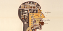 Image of a human head represented as a series of connected rooms inside the skull