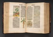 Hortus Sanitatis, 1491 Courtesy National Library of Medicine