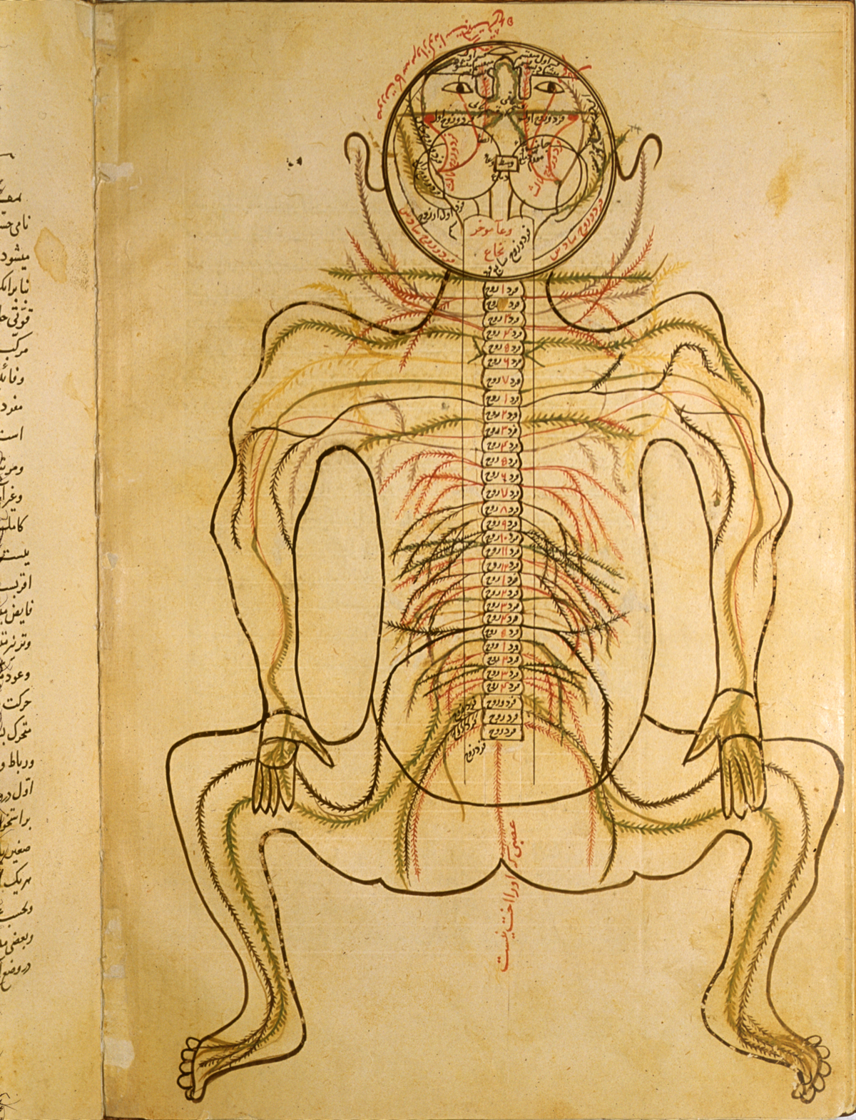 Islamic Medical Manuscripts in the NLM - MS P 19