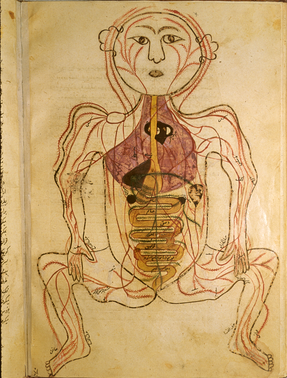Islamic Medical Manuscripts In The Nlm Ms P 19