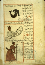 Folio 30b of of Zakarīyā' ibn Muḥammad al-Qazwīnī's 'Ajā'ib al-makhlūqāt wa-gharā'ib al-mawjūdāt  (Marvels of Things Created and Miraculous Aspects of Things Existing) featuring three constellations: above, the zodiacal constellation of Pisces, in the middle, the southern constellation of Cetus shown here as a harpy wearing a crown, and, below, the constellation of Orion depicted as a man carrying a sword in is left hand and a shepherd's staff in his right drawn in opaque watercolors and ink within the text. The thin, fragile, beige paper has indistinct vertical laid lines. The text is written in a rather casual ta'liq script with a tendancy toward naskh, using black ink with headings in red and red overlinings. The text is written within frames of double red lines, with some rectangular areas framed in single red lines and extending into the margins.
