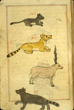 Folio 169a from Zakarīyā' ibn Muḥammad al-Qazwīnī's Ajā'ib al-makhlūqāt wa-gharā'ib al-mawjūdāt (Marvels of Things Created and Miraculous Aspects of Things Existing) featuring four mammals: a small gray cat labeled sannur al-barr ('the desert cat'), a yellow long-tailed dog-like animal labeled sher or 'lion', a pink spotted antelope, and a black spotted feline with bushy tail labelled dab' or 'hyena'. The thin, brittle, lightly glossed, fibrous, yellow-brown paper has horizontal laid lines. The illustrations are set within frames of two red and one blue lines.