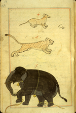 Folio 171a from Zakarīyā' ibn Muḥammad al-Qazwīnī's Ajā'ib al-makhlūqāt wa-gharā'ib al-mawjūdāt (Marvels of Things Created and Miraculous Aspects of Things Existing) featuring three animals: a dog-like animal labeled filw (meaning a colt of a horse or ass) at the top, a pink cheetah (fahd) in the middle, and at the bottom an elephant (fil). The thin, brittle, lightly glossed, fibrous, yellow-brown paper has horizontal laid lines. The illustrations are set within frames of two red and one blue lines.
