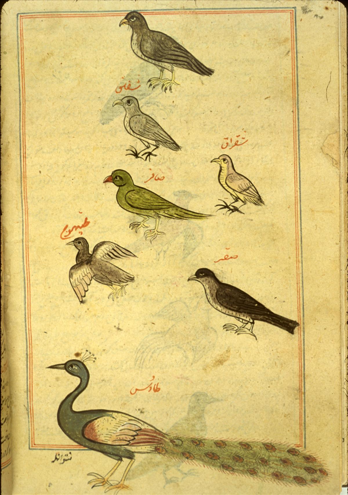 Islamic Medical Manusc...
