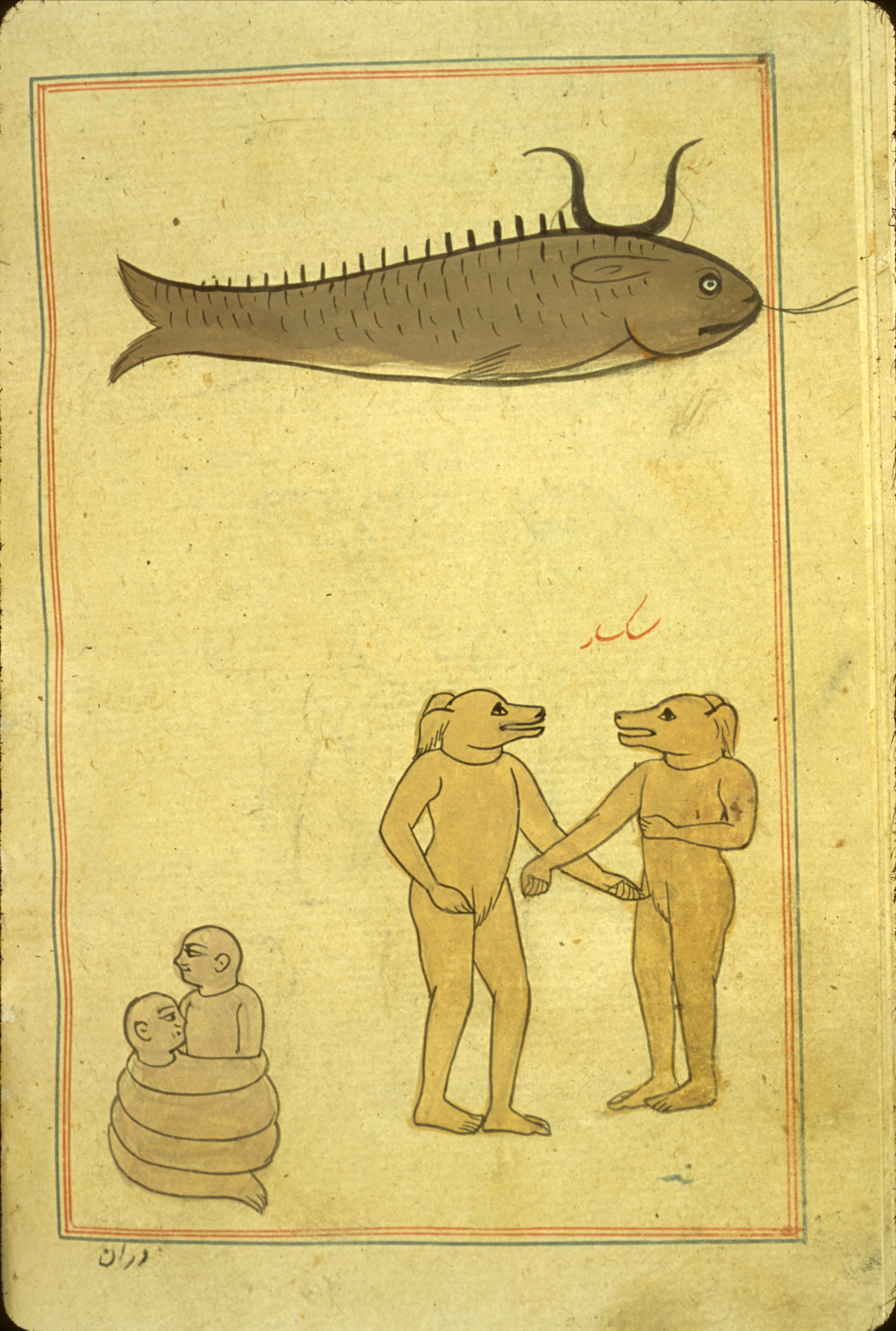 Islamic Medical Manuscripts, Natural History 4