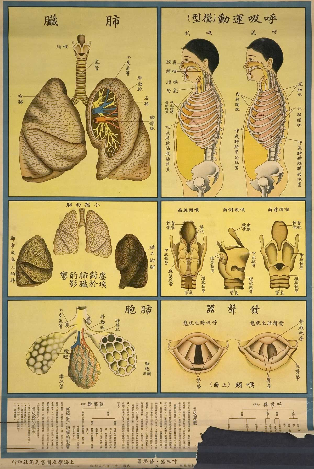 Slide besides Nervous System additionally Measles Viruses Human Respiratory System D Illustration Measles Viruses Human Respiratory System also Red Clover Herbal Remedies as well Ph. on human body respiratory system