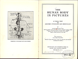 essay questions on the human body