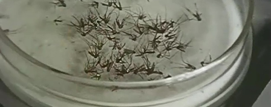 Close-up view of insects in a clear container.