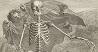A detail of an anatomical engraving featuring a skeleton.