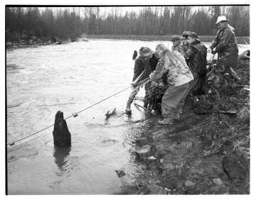 Indians Fish IIlegally, Nisqually River, January 1962