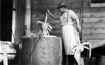 Bill Ritter putting crabs into cooking vat, Aug. 1952