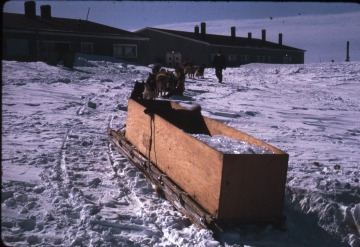 Carrying ice for drinking water by dogsled.