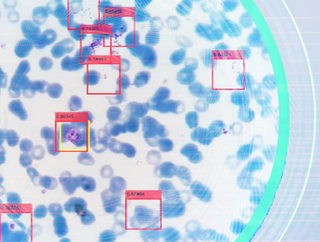 annotated view of stained cells